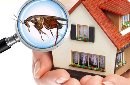 What to Expect from a Pest Inspection