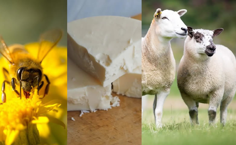 5 Common Animal Ingredients used in Cosmetics