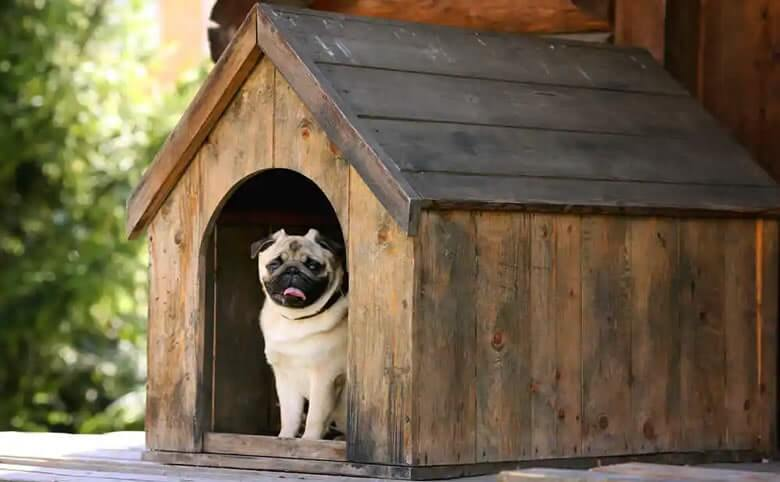 How to Choose the Right Dog Boarding Kennel