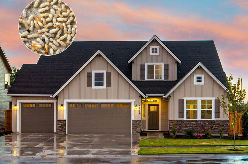 Termites: 5 Signs to Look for in Your Home