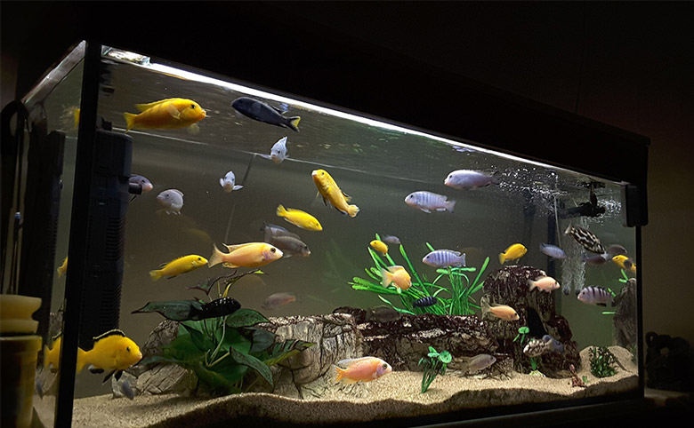How to Properly Feed your Fish